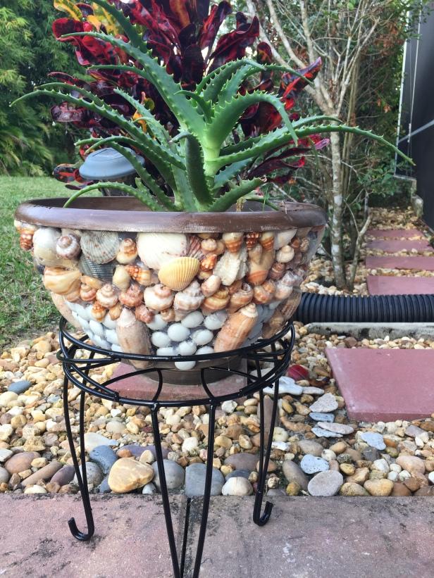 Seashell Planter DIY