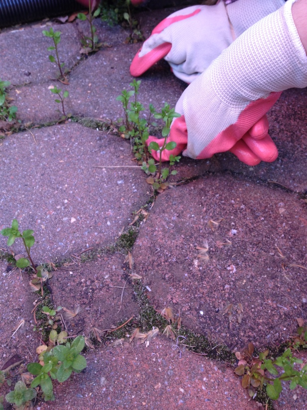weeds everywhere3